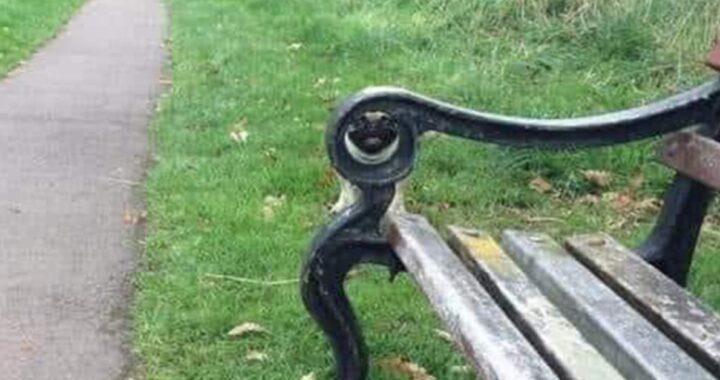 Il gioco del parco e la panchina: riesci a trovare il cane nascosto?