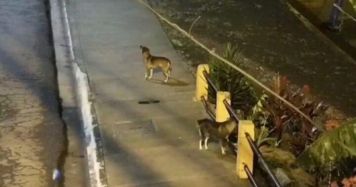 Il cane di strada aiuta la polizia ad arrestare il ladro