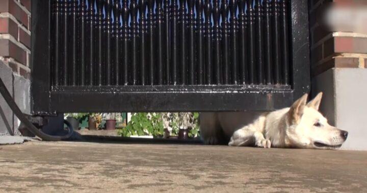 Coppia nota un cane che strisciava sotto il cancello: il marito decide di indagare