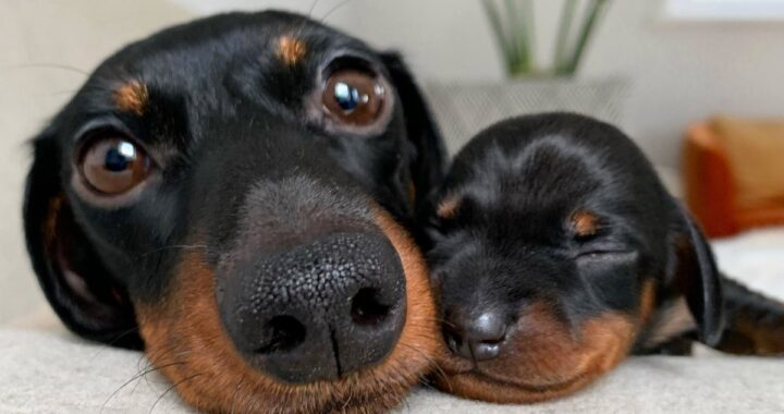 Influencer canina mamma di 6 cuccioli