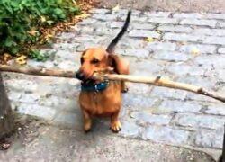 la passione di Bosco per i bastoni