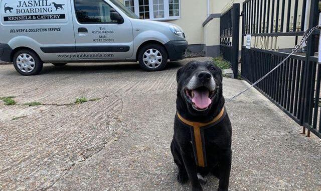 Labrador abbandonato con una nota: è stato lasciato legato ad una ringhiera