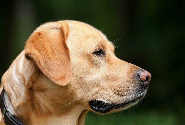 Cani Salvataggio-Tirreno dell'Unità Cinofila Sics