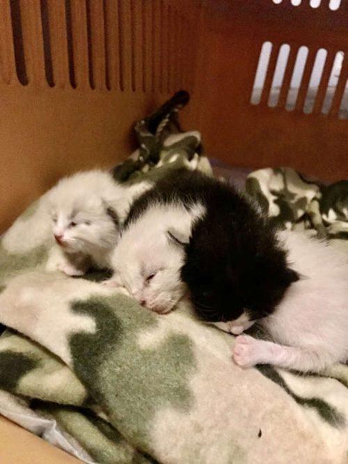 Cagnolina adotta tre gattini