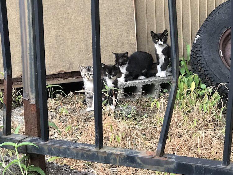Foto di gatti che riposano insieme