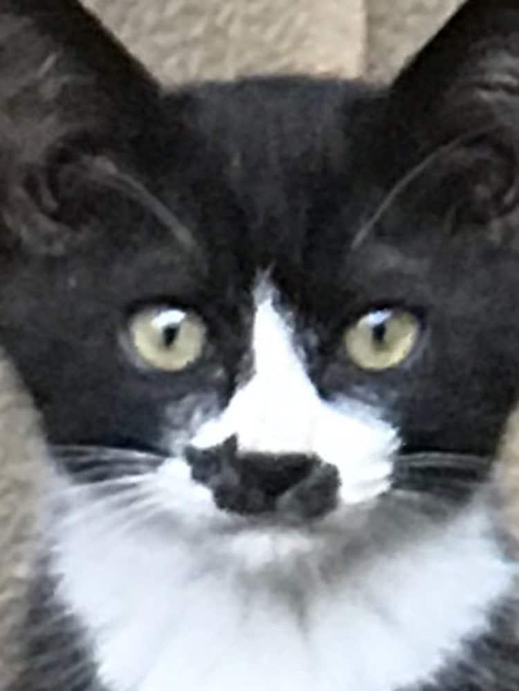 Macchia a forma di gatto nero sul naso
