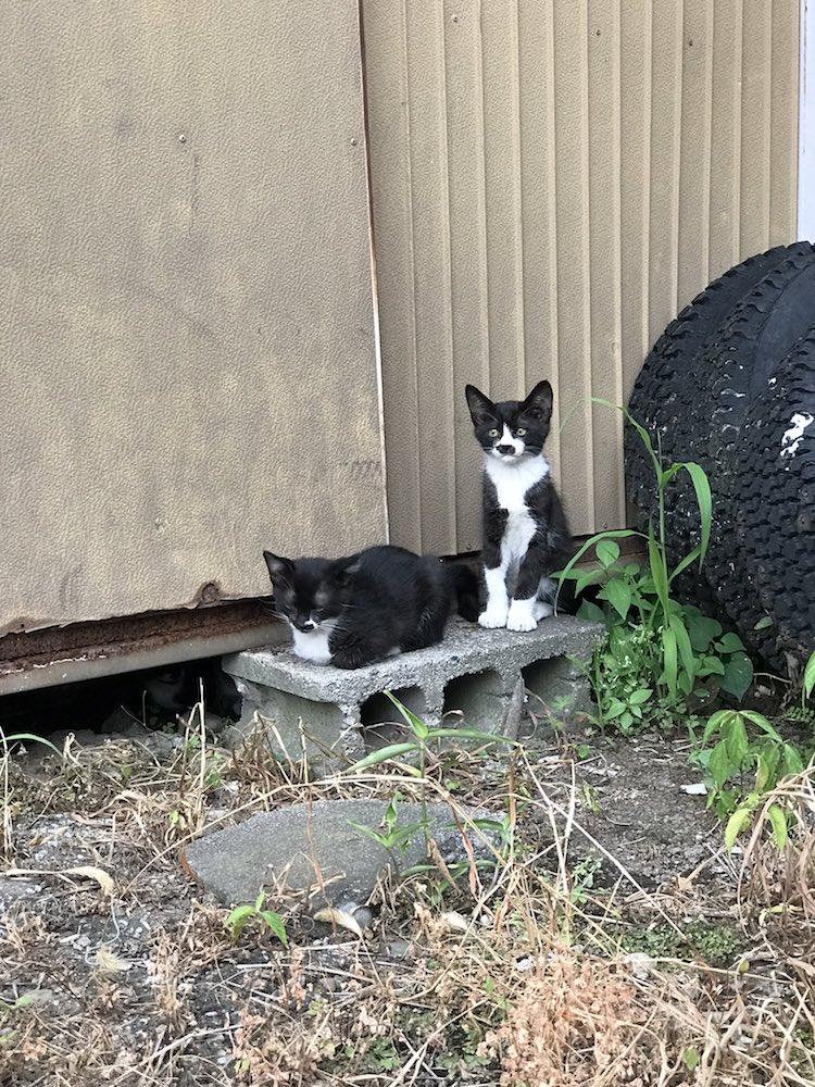 Gatti bianchi e neri in strada