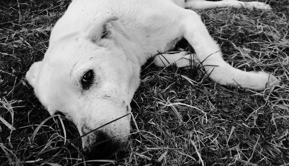 Cani abbandonati per strada