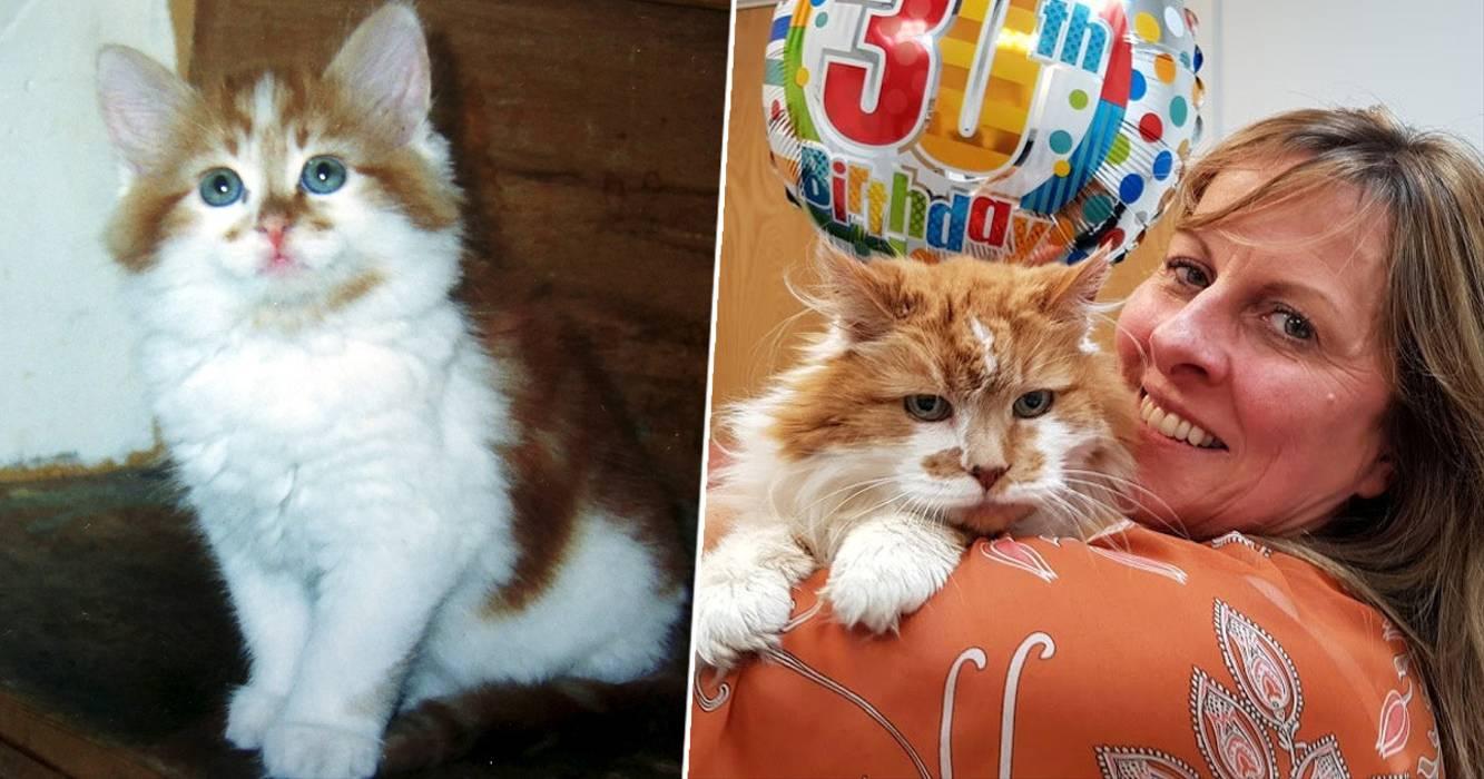 Rubble il gatto più anziano del mondo