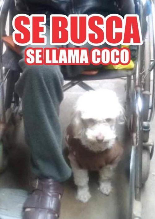 Denuncia di scomparsa di Coco
