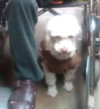 Cucciolo di cane smarrito