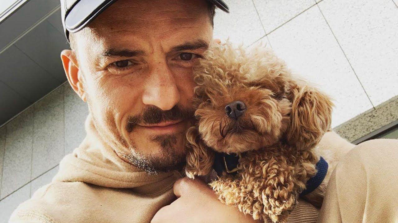 Una ricompensa per il cane di Orlando Bloom