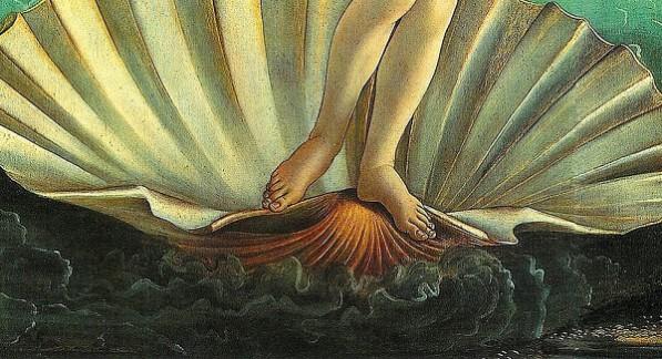 Tutto sul piede di Venere