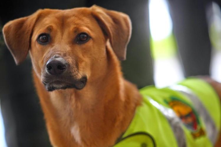 Il cane salvato diventa poliziotto