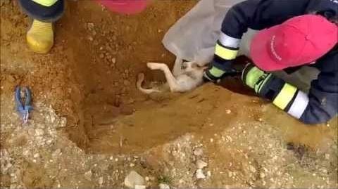 Cucciolo incastrato in un  tubo