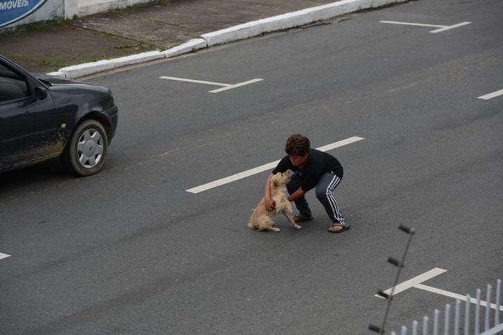 Cane investito in mezzo alla strada