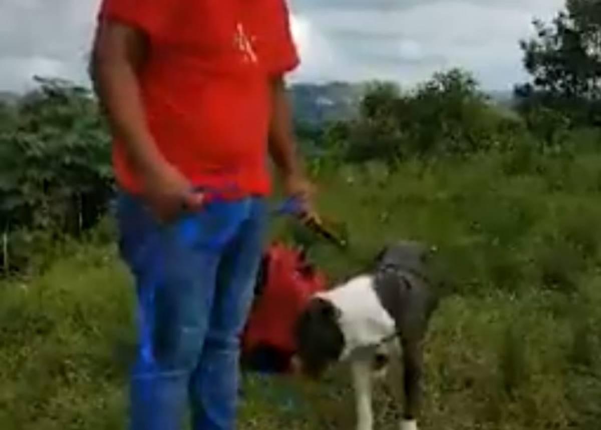 pitbull abbandonato