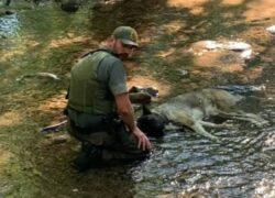 Cane disidratato salvato da un ranger