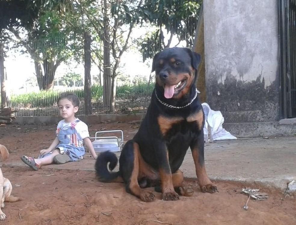 Il Rottweiler che ha salvato Enzo