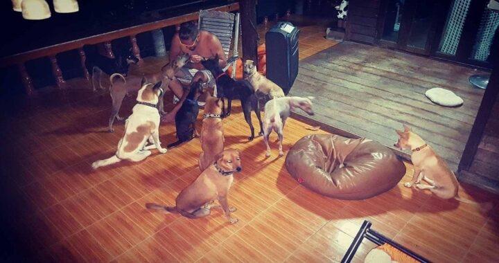 Coniugi salvano cani randagi