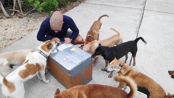 Il salvataggio dei cani randagi dell'isola
