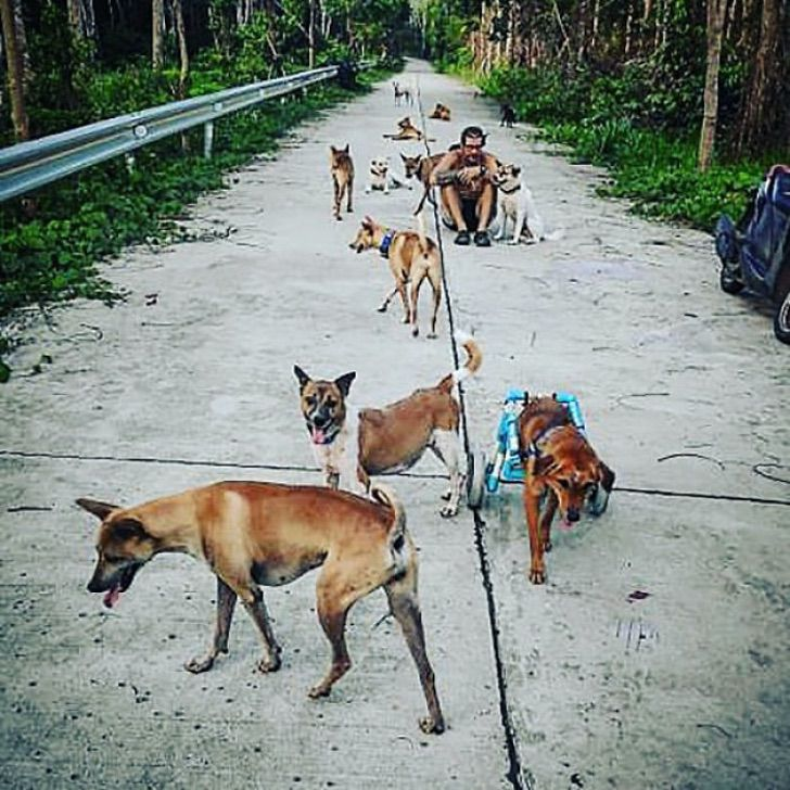 Rifugio per animali a Koh Kood