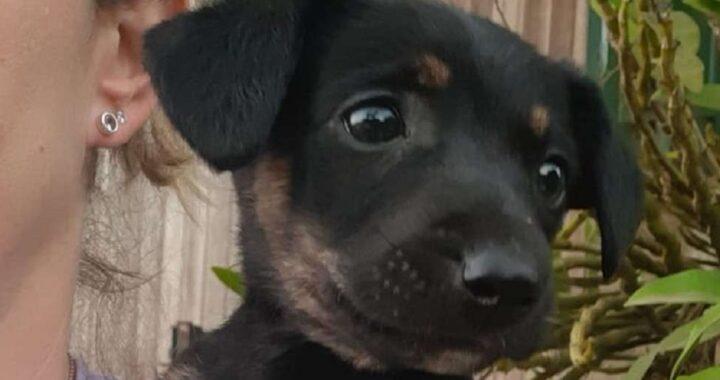 Salvate le cagnoline nate senza zampe e abbandonate