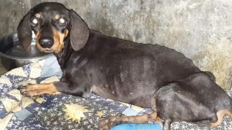 Il povero cucciolo malnutrito e abbandonato