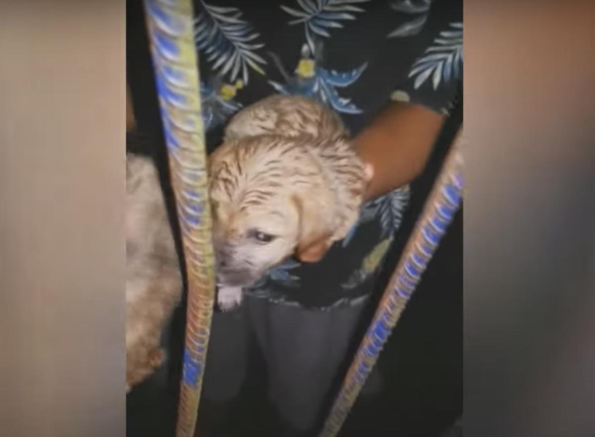 Due cuccioli salvati da un soccorritore