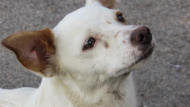 Cani maltrattati dal proprietario