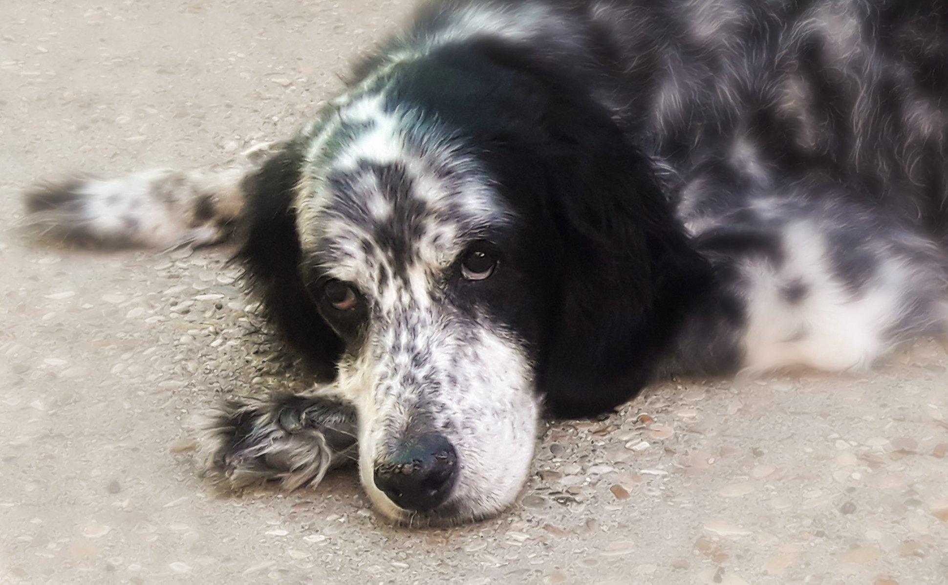 Stella e l'eutanasia