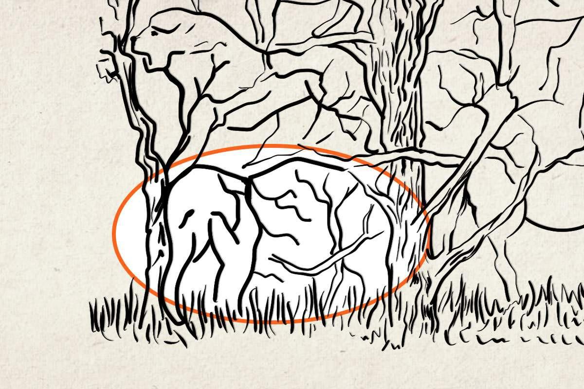 disegno elefante