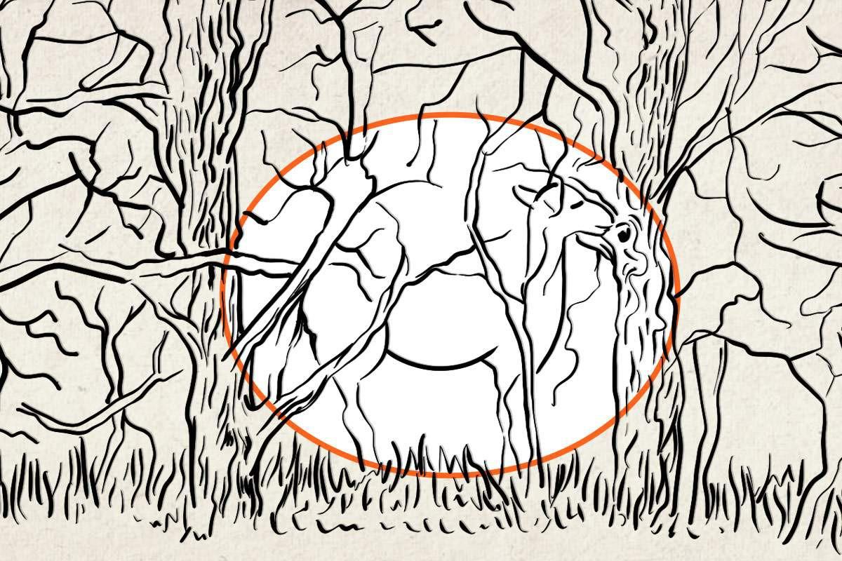 cammello disegnato