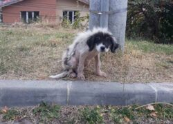 trovato cane abbandonato