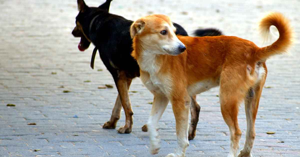 Cani randagi in cerca d'aiuto