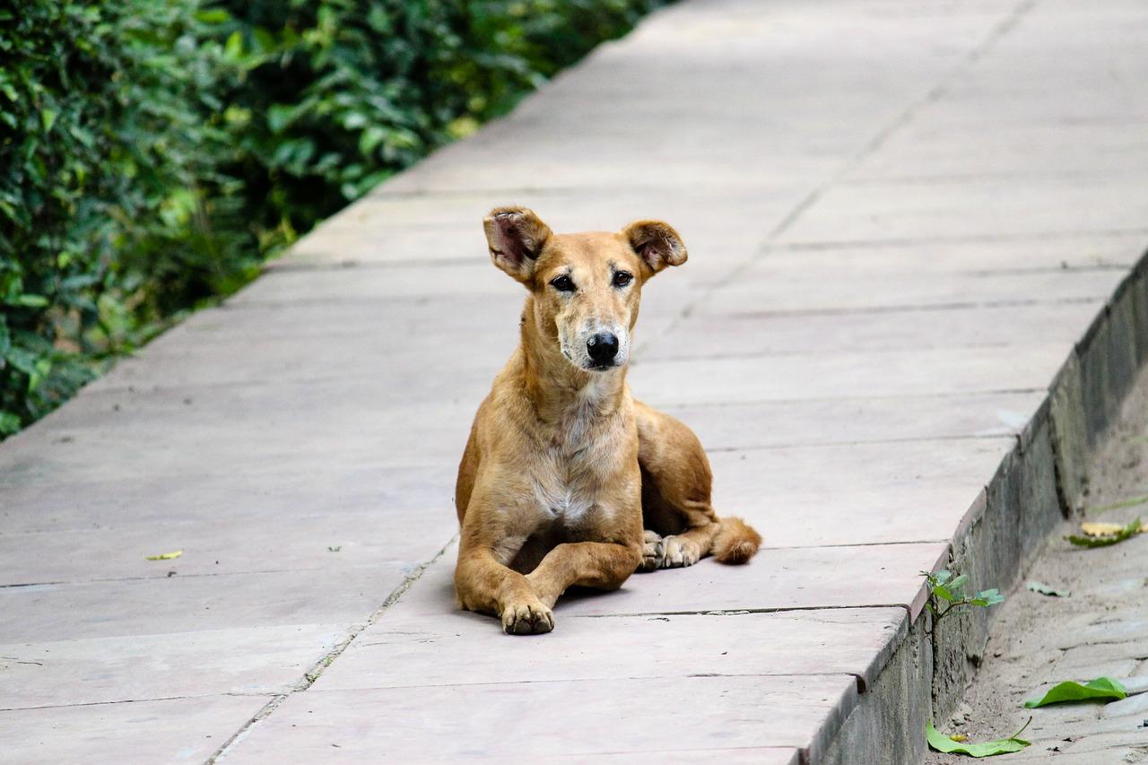 Chi aiuta in cani randagi