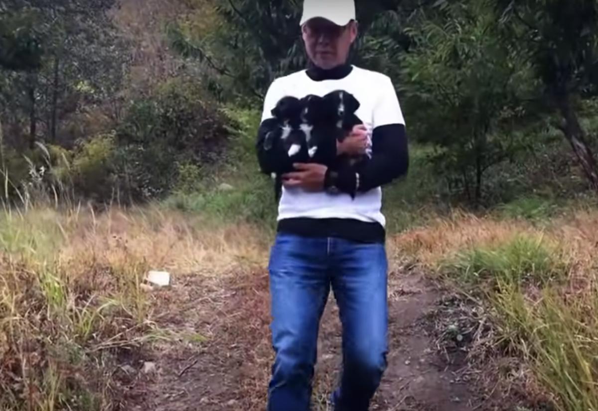 volontari salvano 3 cuccioli