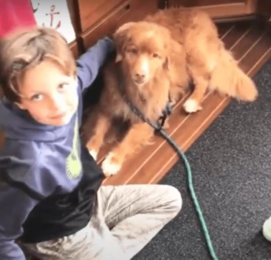 Cane salvato dall'annegamento