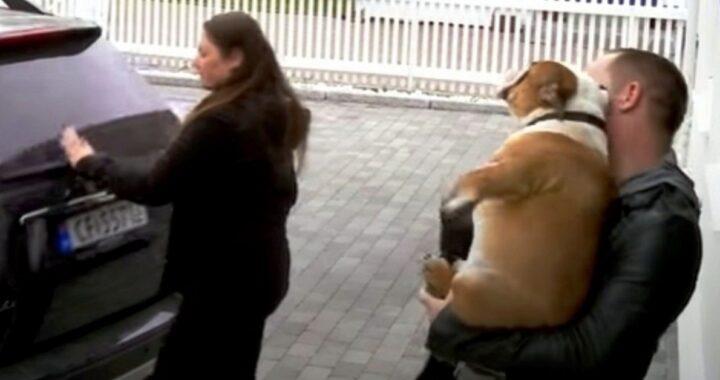 Igor, il cane lasciato in canile