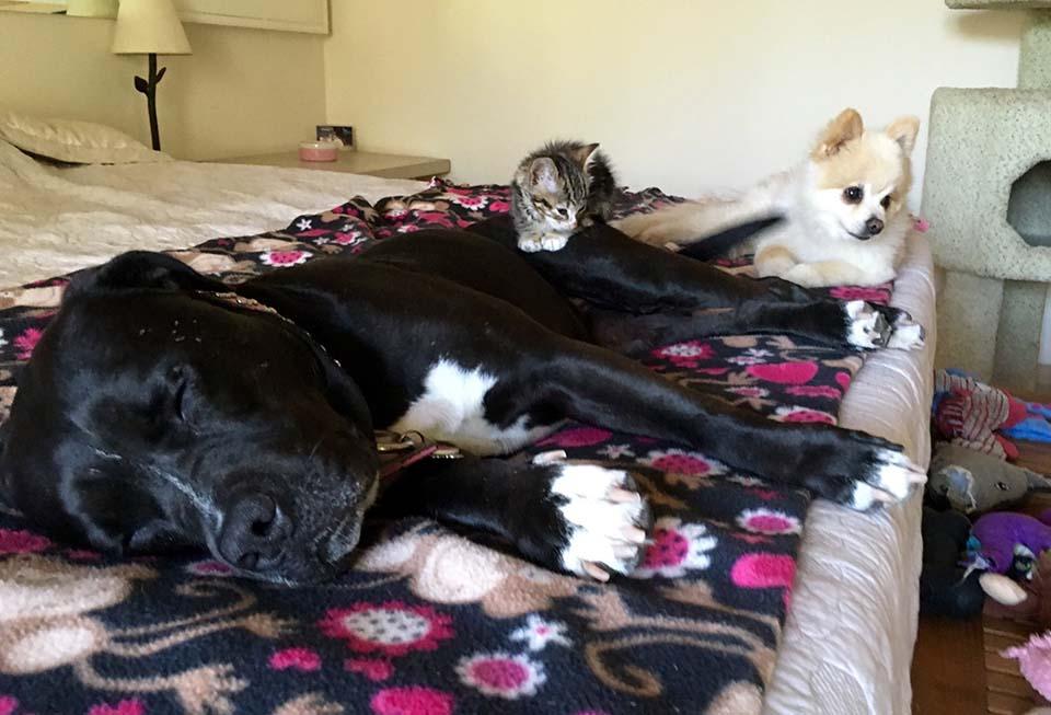 Sharra Platt trova un gattino