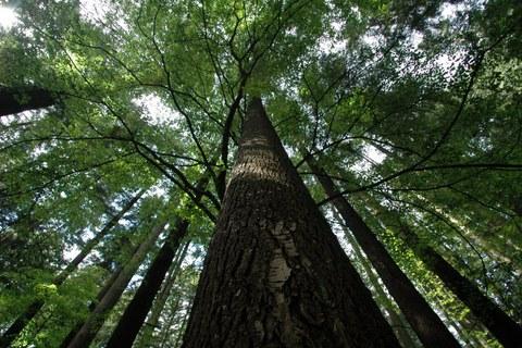 Qui c'è l'albero più alto d'Italia: viaggio per gli amanti della natura
