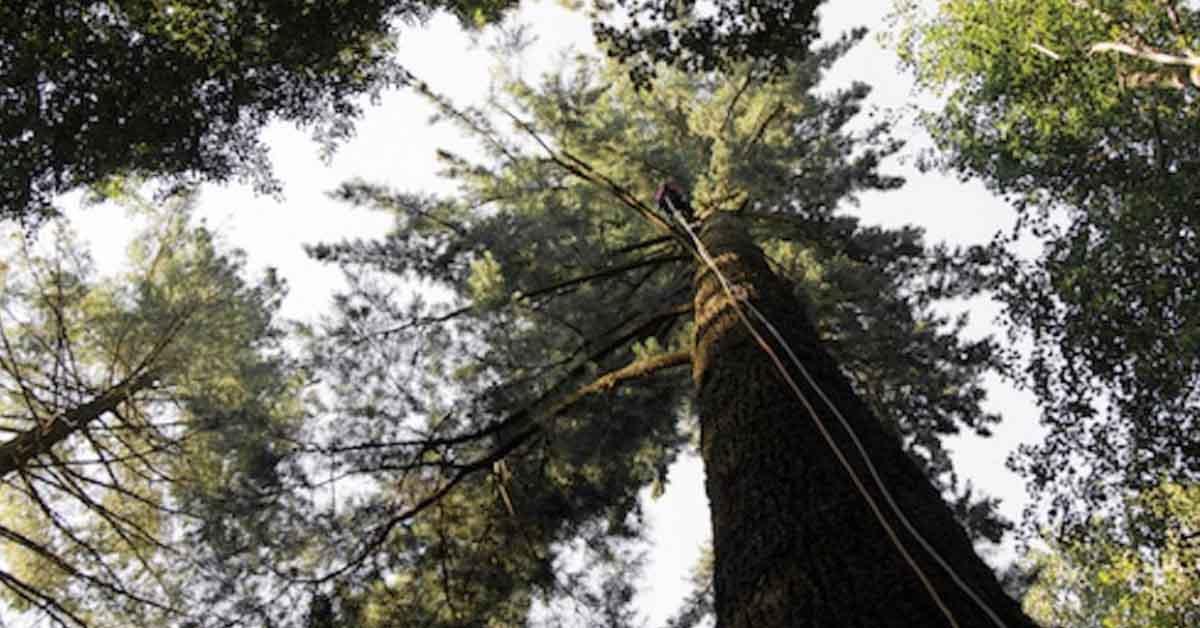 Viaggio per gli amanti della natura: qui c'è l'albero più alto d'Italia