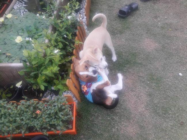 I cani rotolano sul pavimento