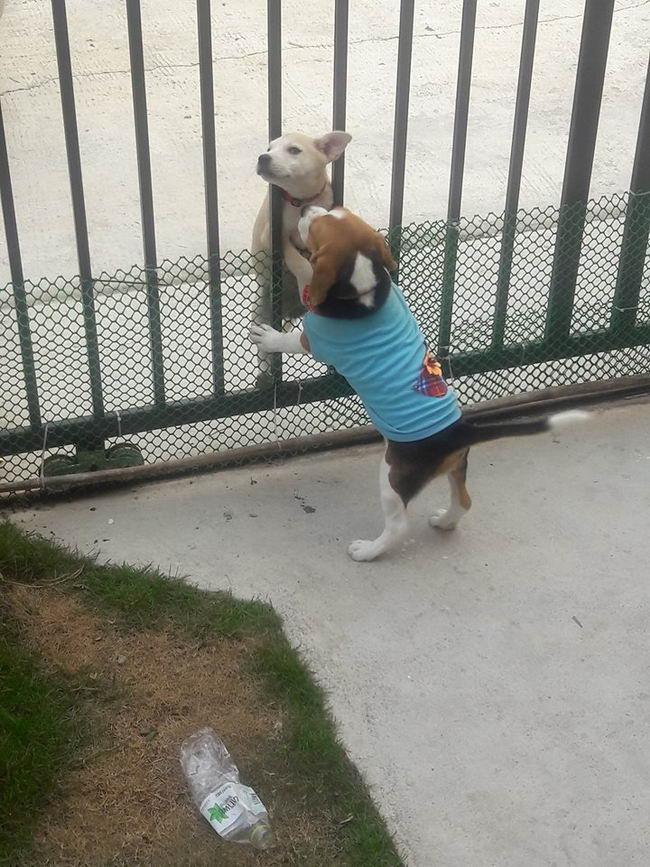 I cani giocano insieme