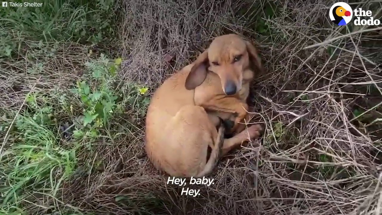 Cane maschio abbandonato