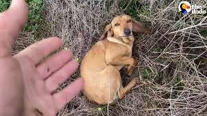Cane randagio cerca aiuto