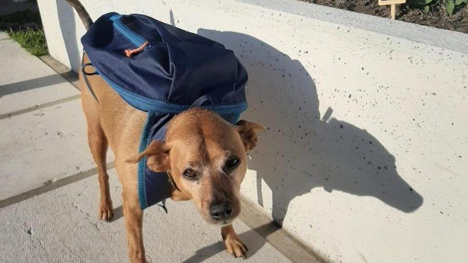 Luigi il cane postino