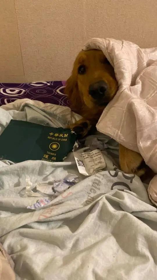 Il cane colpevole della distruzione