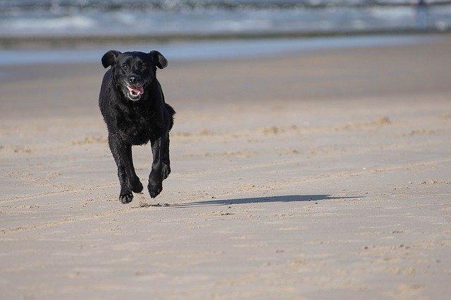 Cane corre sulla sabbia