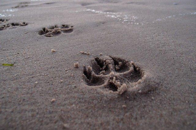 Orme lasciate sulla spiaggia
